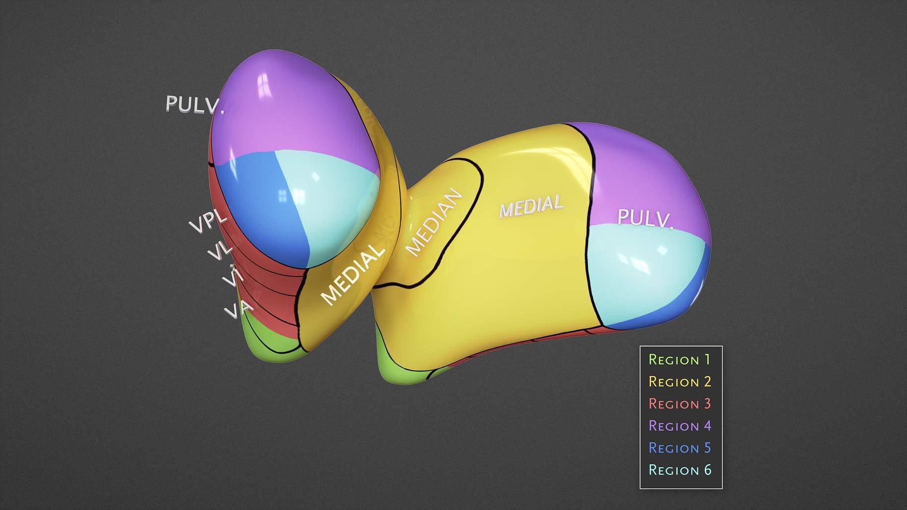 Figure 6: Operative regions for the posterior thalamus.