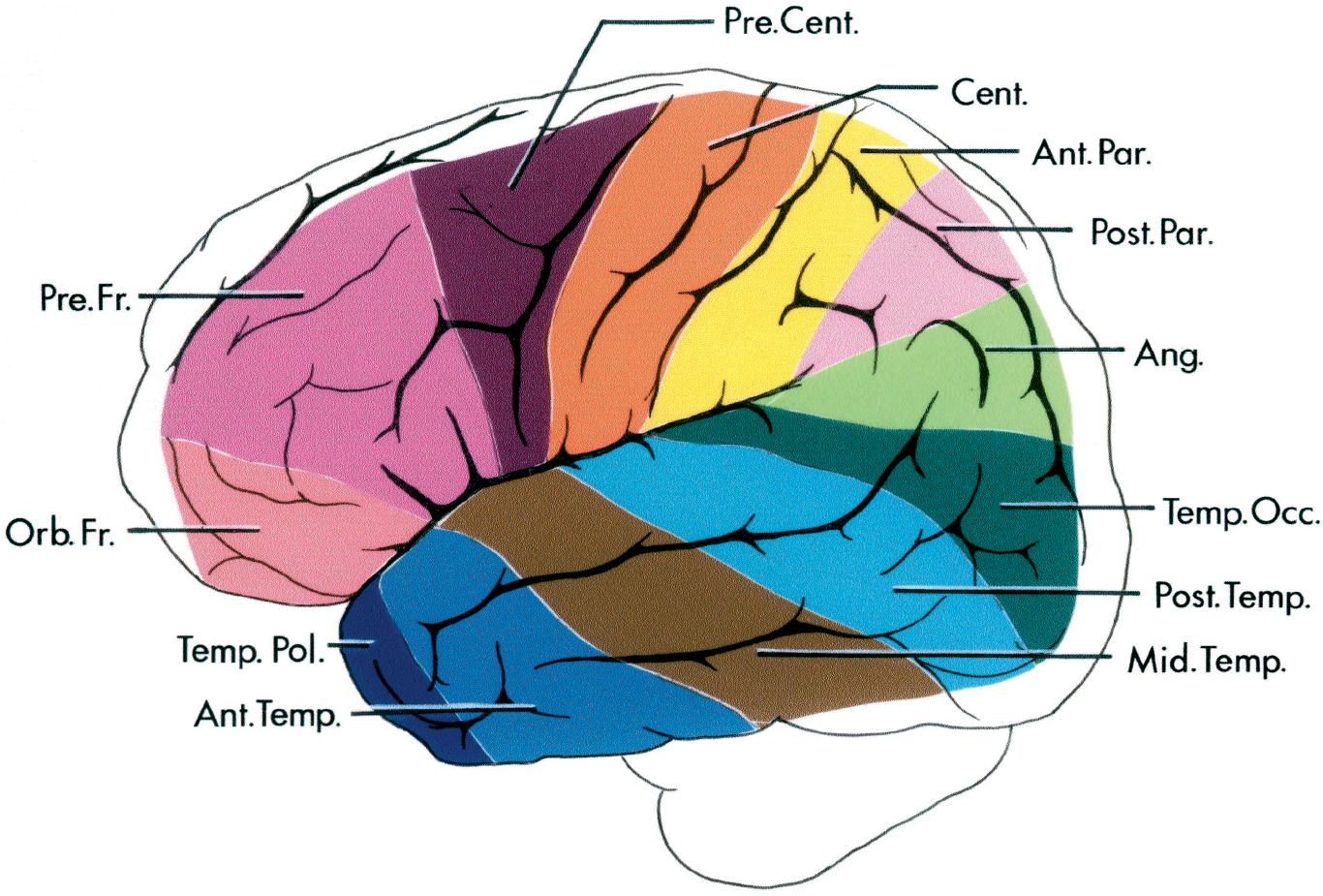 FIGURE 2.17. Classification of the cortical areas used in this study The territory of the middle cerebral artery is divided into 12 areas: orbitofrontal, prefrontal, precentral, central, anterior parietal, posterior parietal, angular, temporo-occipital, posterior temporal, middle temporal, anterior temporal, and temporopolar. Ang., angular; Ant., anterior; Cent., central; Mid., middle; Orb.Fr., orbitofrontal; Par., parietal; Post., posterior; Pre.Cent., precentral; Pre.Fr., prefrontal; Temp., temporal; Temp. Occ., temporo-occipital; Temp. Pol., temporopolar. (From, Gibo H, Carver CC, Rhoton AL Jr, Lenkey C, Mitchell RJ: Microsurgical anatomy of the middle cerebral artery. J Neurosurg 54:151–169, 1981 [14].)