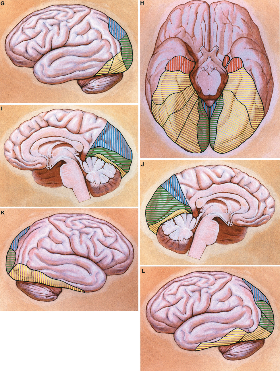 FIGURE 2.37 G-L. The calcarine and parieto-occipital arteries are also present. The fourth most common pattern (10% of hemispheres) is depicted on the left hemisphere (G and J, and right half of basal view, H). This arrangement includes anterior and posterior temporal, calcarine, and parietooccipital arteries, but no hippocampal or middle temporal branches of the PCA. The area of the calcarine artery is split into two sectors to illustrate that there were two calcarine arteries arising from the PCA, as occurs in 10% of hemispheres.