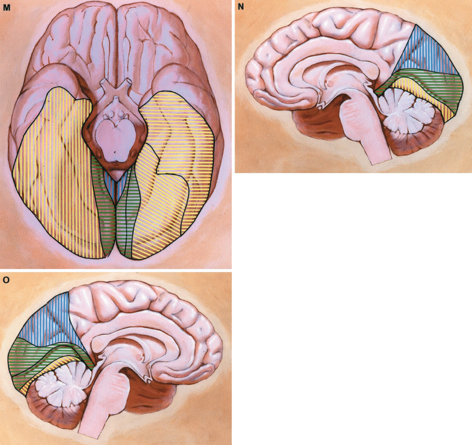 FIGURE 2.37 M-O. The fifth most common pattern (10% of hemispheres) is illustrated on the right cerebral hemisphere (K and N, and left half of basal view, M). This pattern includes hippocampal, anterior, middle and posterior temporal, calcarine, and parieto occipital arteries. The area supplied by the posterior temporal artery is split into two parts to show that two posterior temporal arteries arise from the PCA, as occurs in 6% of cerebral hemispheres. The parieto-occipital artery supplies the larger part of the medial surface. The last pattern illustrates some notable variants (L and O, and right half of basal view, M). Two hippocampal arteries arise from the PCA, a finding present in 12% of cerebral hemispheres. The anterior temporal artery supplies a smaller than usual amount of the anterior and lateral temporal surfaces, the remainder is supplied by the middle cerebral artery. The calcarine artery supplies an unusually large area on the medial surface. (From, Zeal AA, Rhoton AL Jr: Microsurgical anatomy of the posterior cerebral artery. J Neurosurg 48:534–559, 1978 [43].)