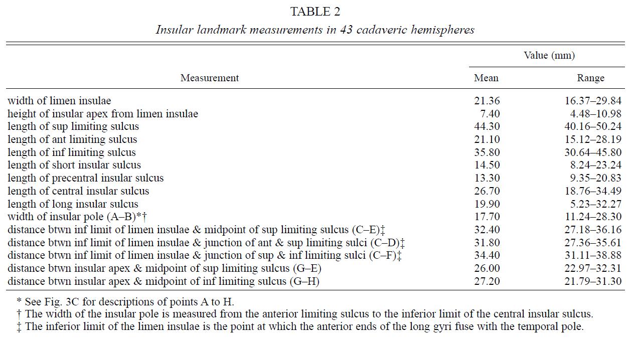 Table 2.Insular landmark measurements in 43 cadaveric hemispheres.