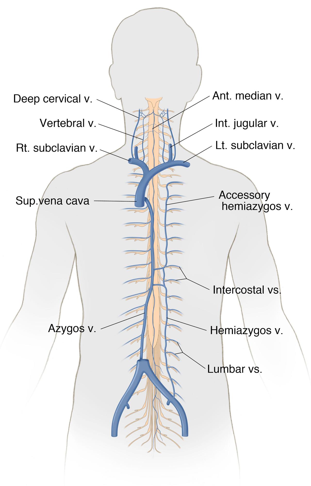 Figure 11: Diagram of the SC segmental venous drainage.